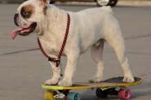 DIY-Dog-Skaeboard-Training