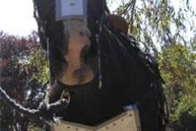 DIY-Horse-Costume-Armor