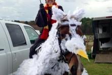 DIY-Horse-Hippogriff-Costume