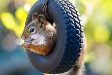 DIY-Squirrel-Tire-Swing-Feeder