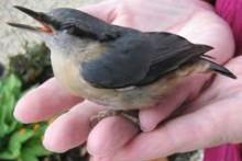 DIY-Stunned-Bird-Care