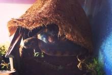 Planter-Liner-Tortoise-Hut