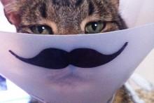 DIY-Cat-Cone-Mustache