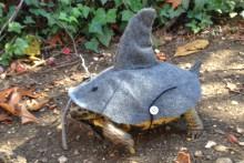 DIY-Tortoise-Shark-Costume