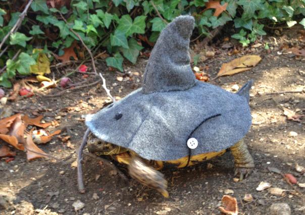 Diy Tortoise Shark Costume Petdiys Com