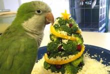 DIY-Broccoli-Bird-Christmas-Tree