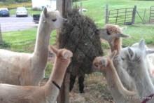 DIY-Bucket-Hay-Net-Stuffer