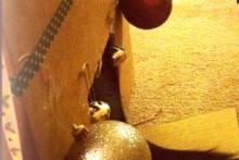 DIY-Cat-Christmas-Box-House