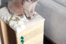 DIY-Cat-Tuffet-Scratcher