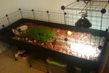 DIY-Grid-Cage-Tortoise-Table