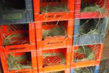 Milk-Crate-Nesting-Box