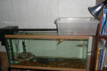 Plastic-Container-Turtle-Dock