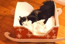 DIY-Box-Cat-Sleigh