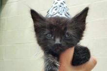 DIY-Cat-New-Years-Hat