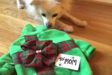 DIY-Dog-Christmas-Present-Sweater