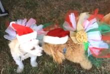 DIY-Dog-Christmas-Tutu