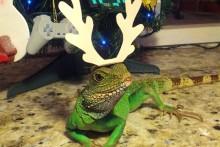 DIY-Paper-Reptile-Reindeer-Antlers