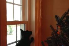 DIY-Wall-Anchored-Christmas-Tree