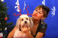 Pipe-Cleaner-Dog-Antlers