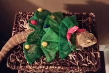 Bearded-Dragon-Christmas-Tree-Dress