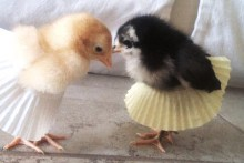 Cupcake-Wrapper-Chick-Tutu