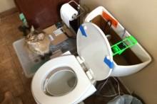 DIY-Automatic-Cat-Toilet-Flusher