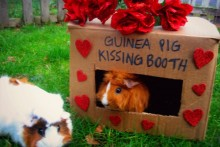 DIY-Box-Kissing-Booth