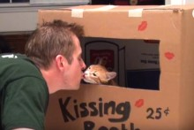 DIY-Cat-Kissing-Booth-Box