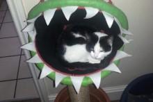 DIY-Mario-Plant-Cat-Bed