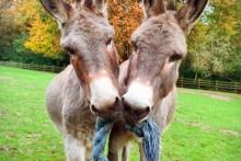 DIY-Rope-Donkey-Toy