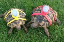 DIY-Sugru-Tortoise-Tracker