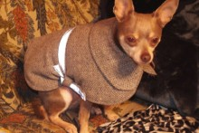 DIY-Wool-Dog-Fitted-Cape