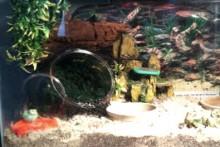 Fish-Bowl-Moss-Pit