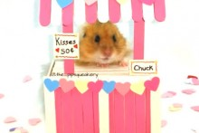 Popsicle-Stick-Hamster-Kissing-Booth