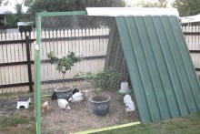 Swing-Set-Chicken-Coop