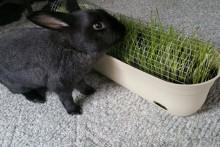 DIY-Rabbit-Grazing-Planter