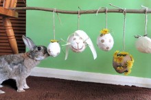 DIY-Rabbit-Pinata-Foraging-Station